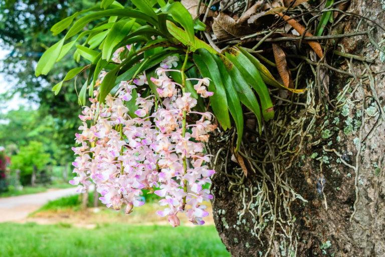 Orchideen Baum