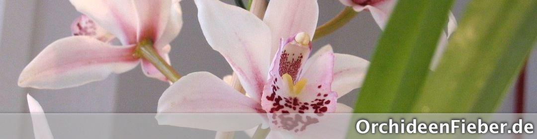 Orchideenfieber.de